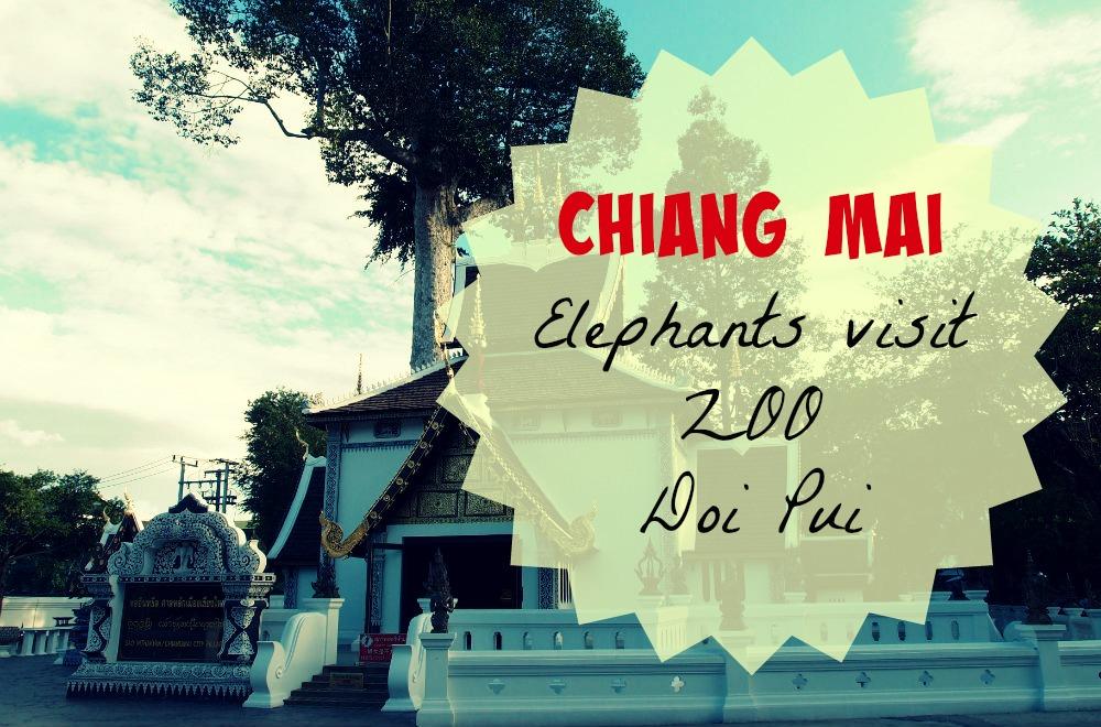 Chiang Mai - Elephants